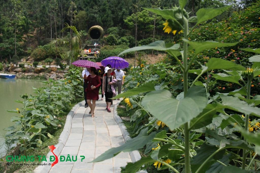 Hoa Hướng Dương trồng rất nhiều trên con đường ven sông