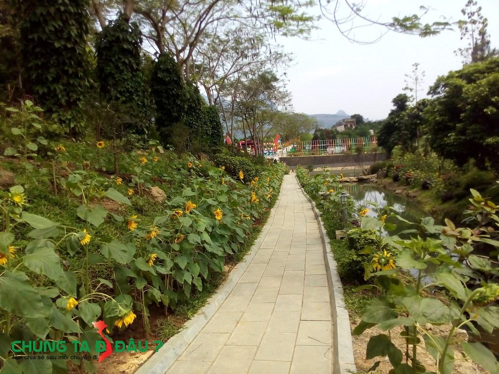 Con đường ven sông được trồng rất nhiều hoa Hướng Dương