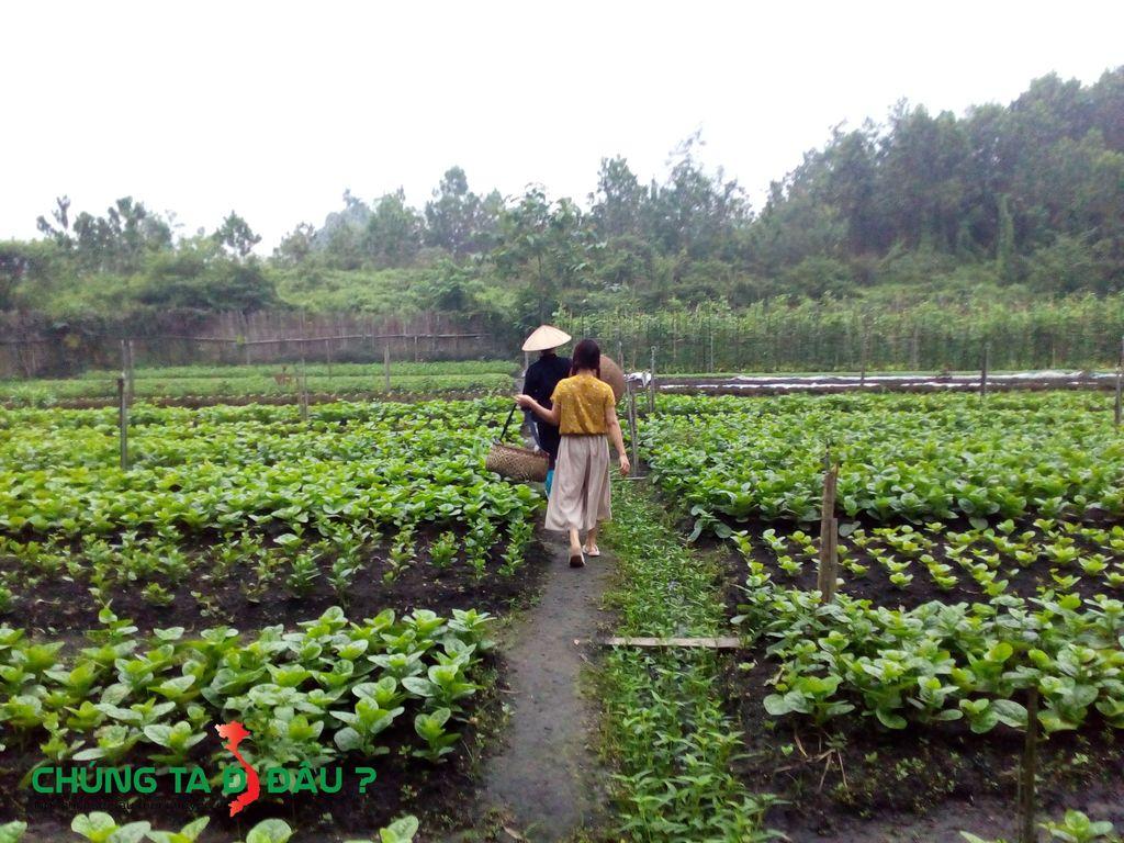 5h sáng tôi ra vườn hái rau cùng các chị trong bản làng