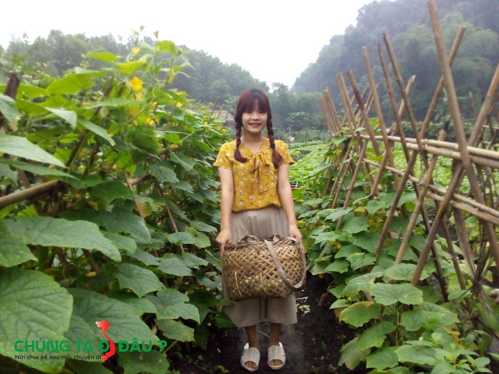 Trải nghiệm hái rau tại làng nhà sàn Thái Hải
