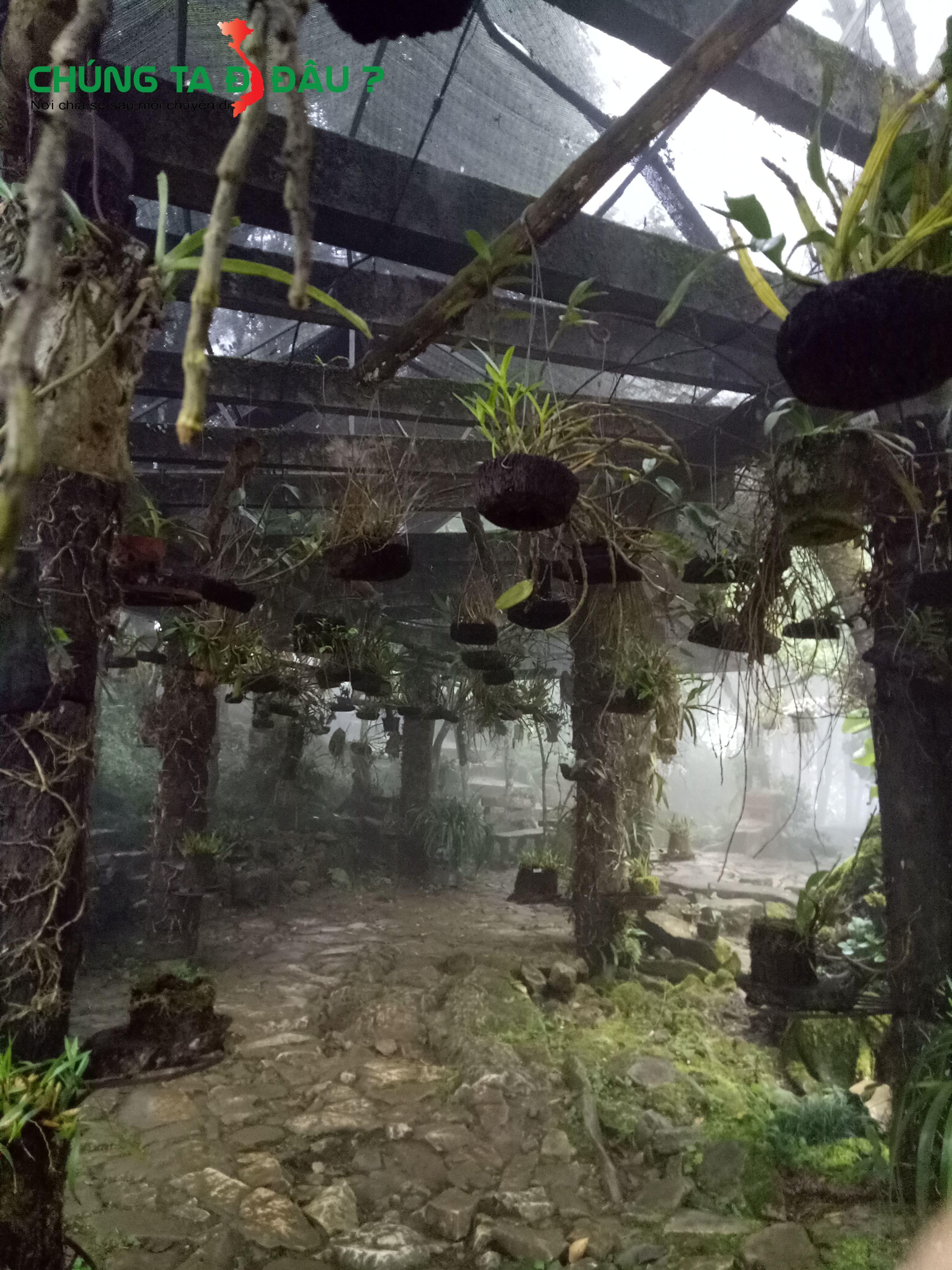 Vườn Lan cổ