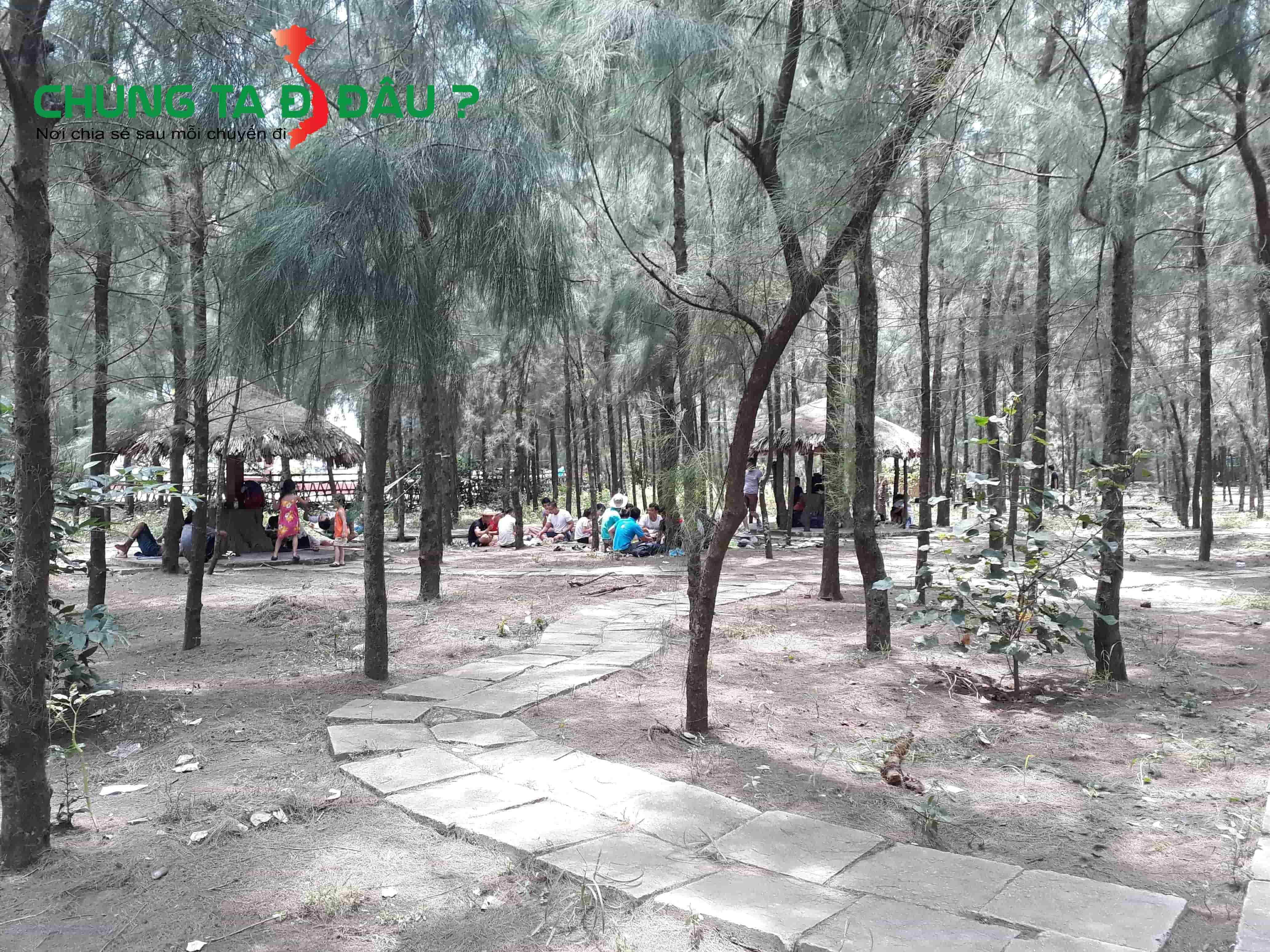Du khách ngồi nghỉ trong rừng thông